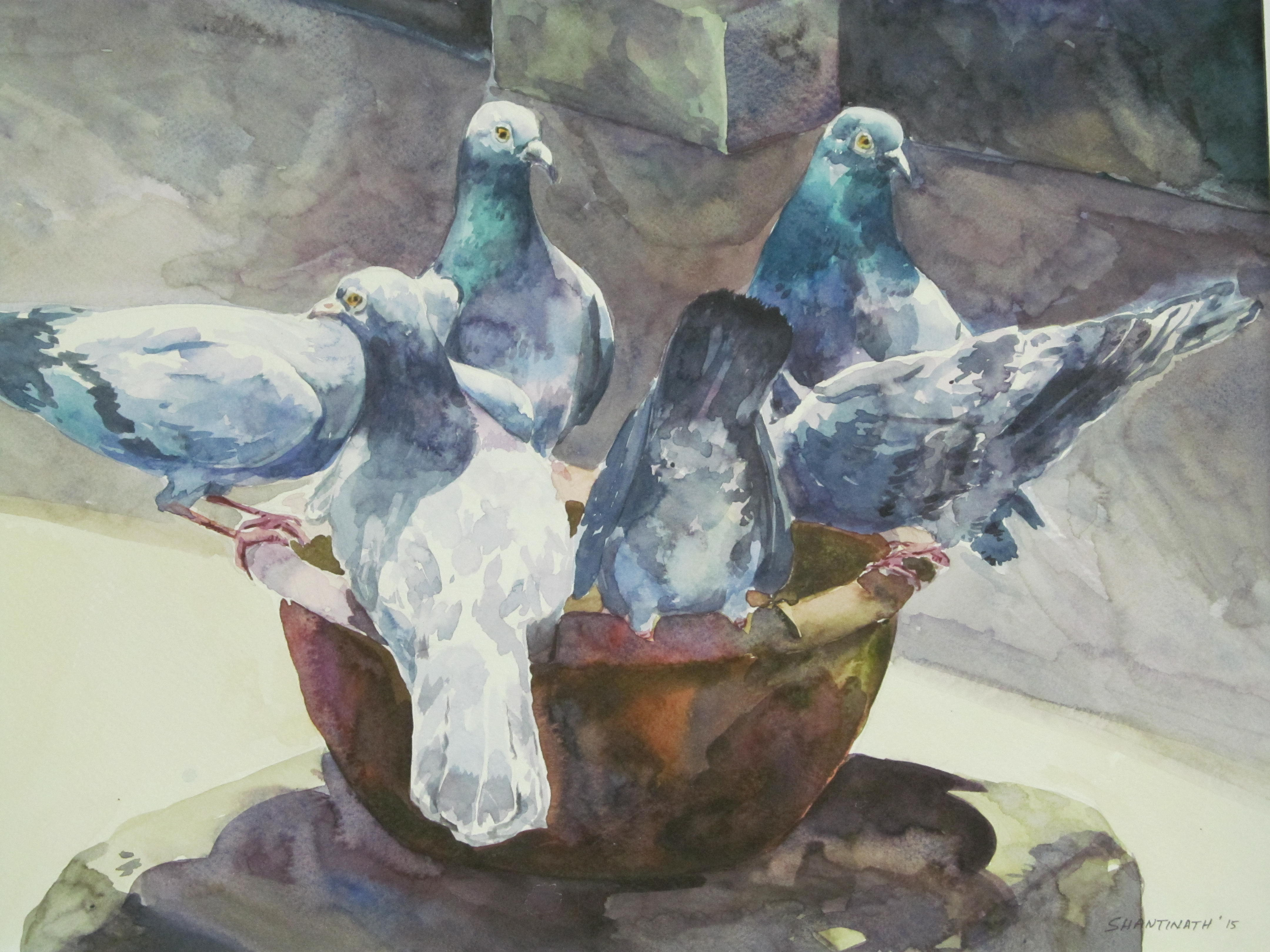 The thirsty pigeons 7061