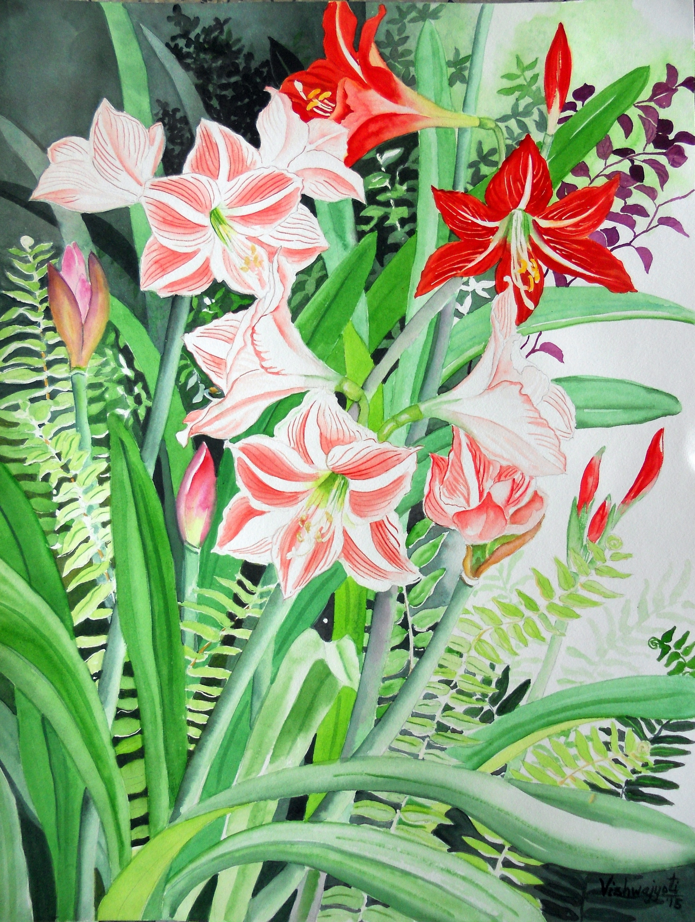 Amaryllis and Hippeastrum 7211