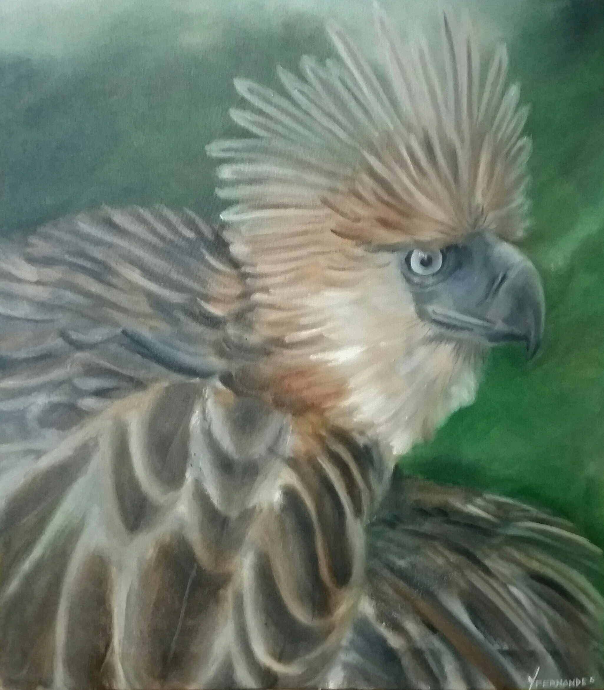 The Endangered Philippine Eagle 12086