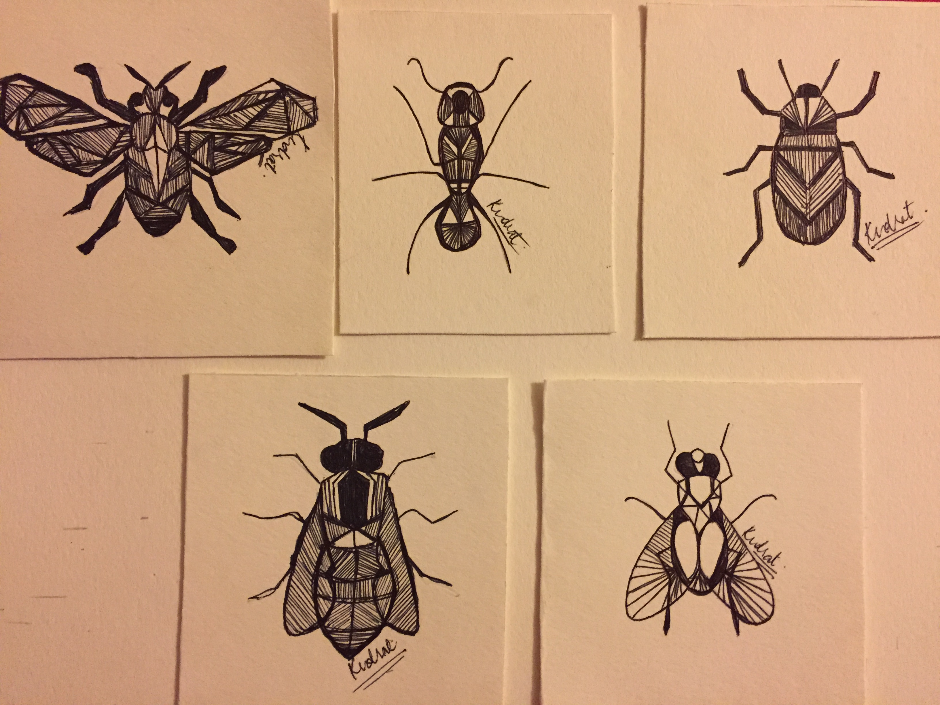 Insects 12311