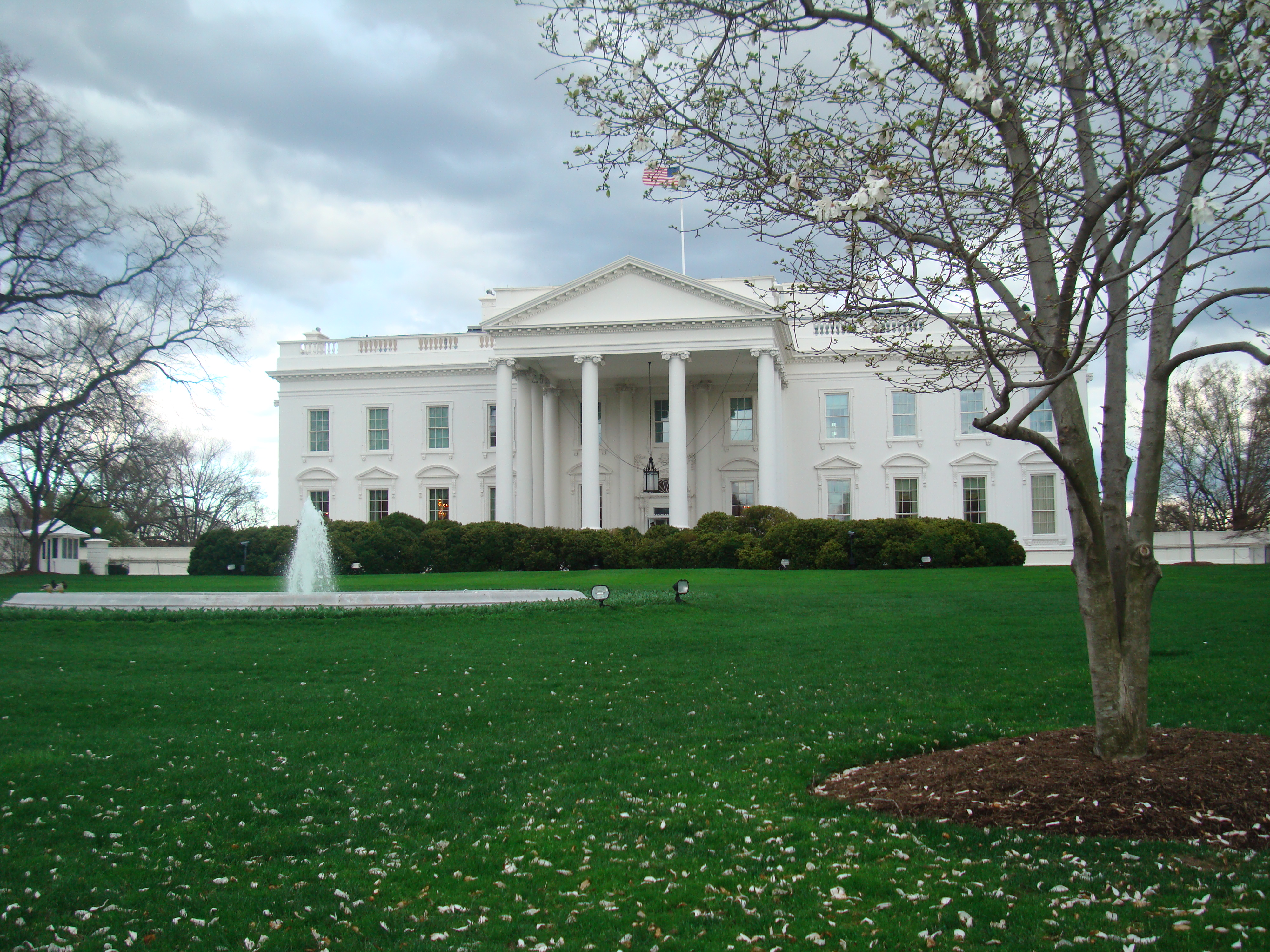 The white house 12631