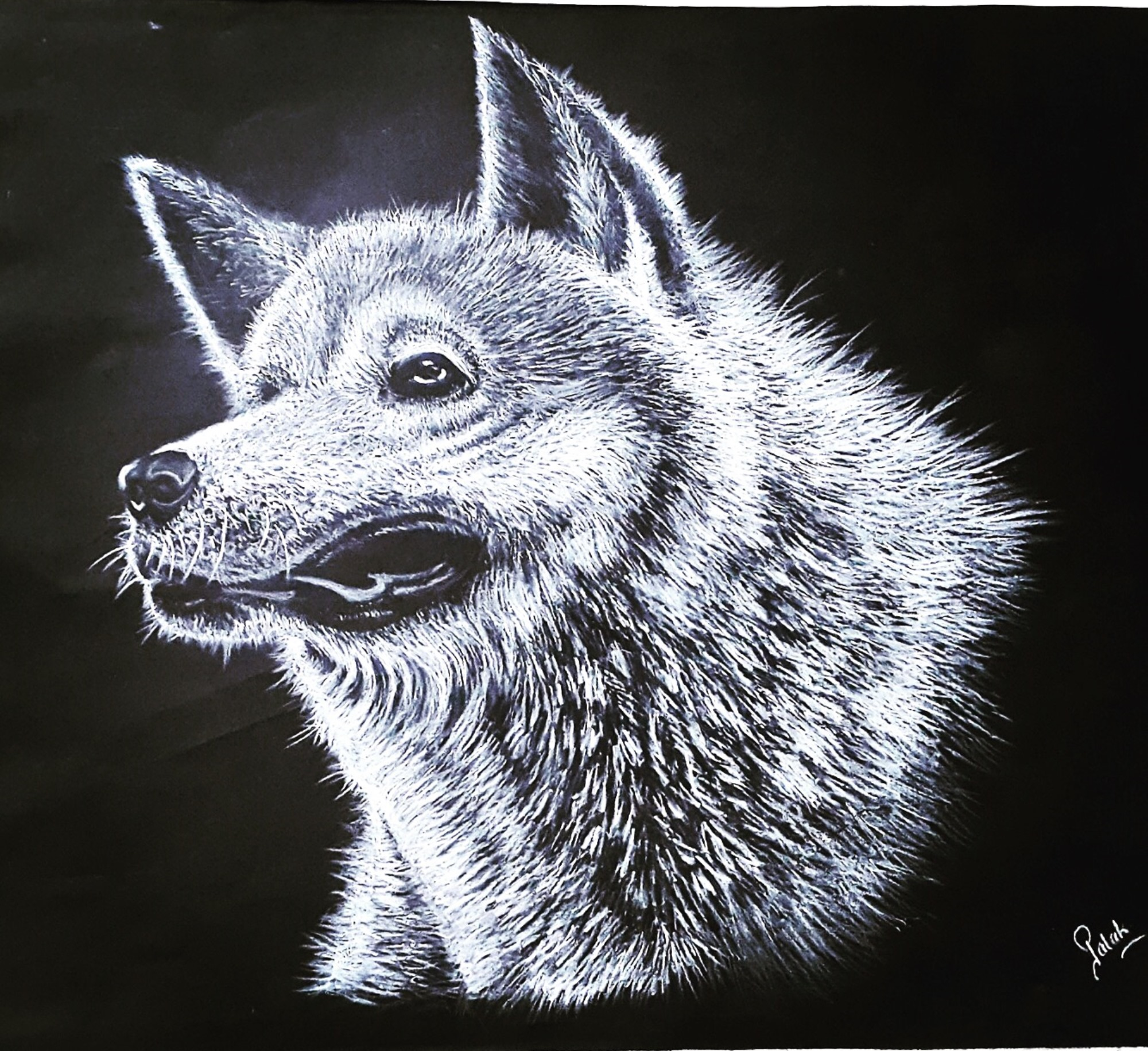 The Wolf 13677