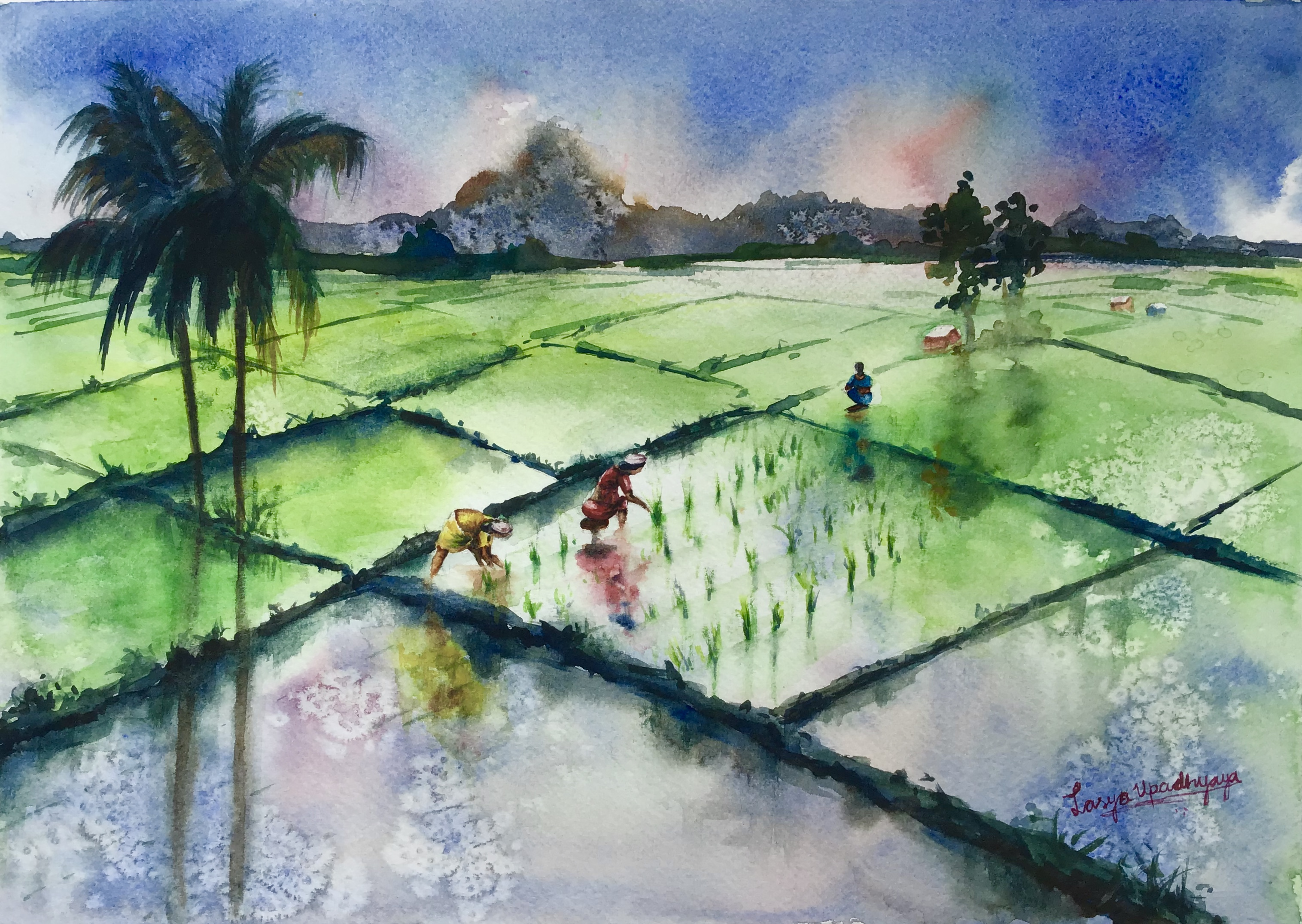 A Days Work at Paddy Fields 16273