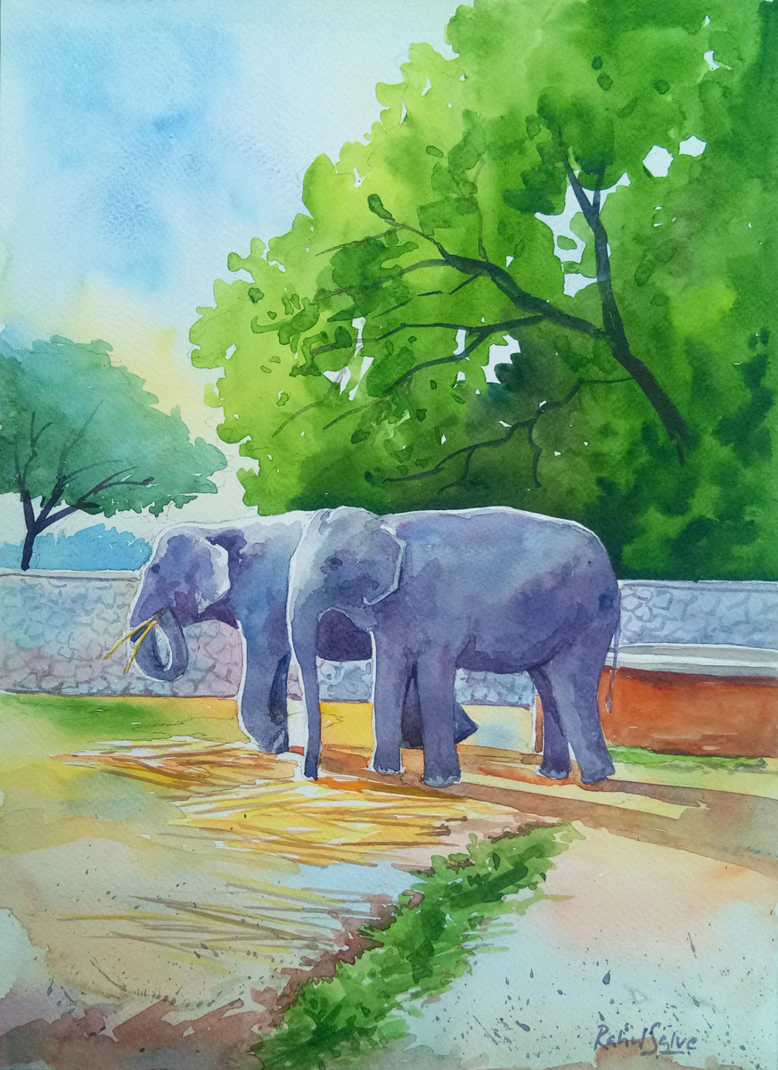 Elephant Couple 16372