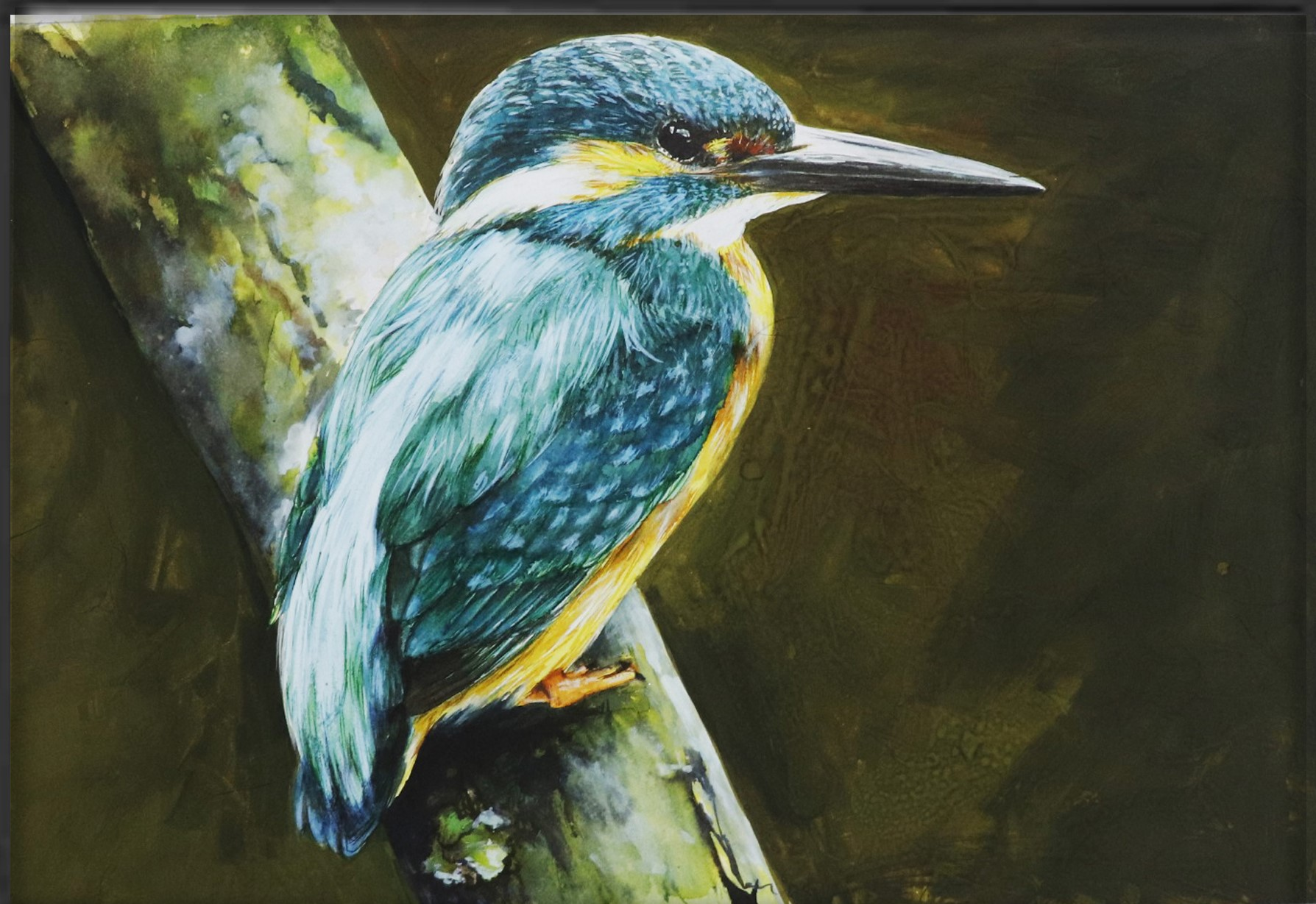 Kingfisher Bird 16433